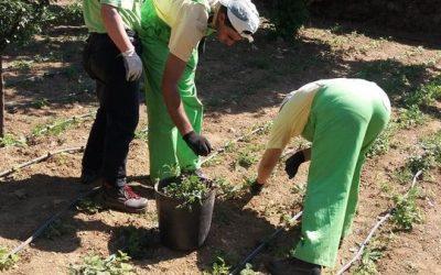 Cultivar a Inclusão – Ervas da Vila